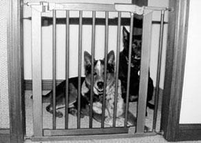 puppy gate
