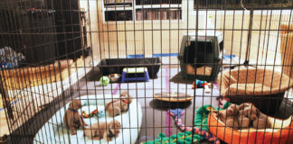 puppies in play pen