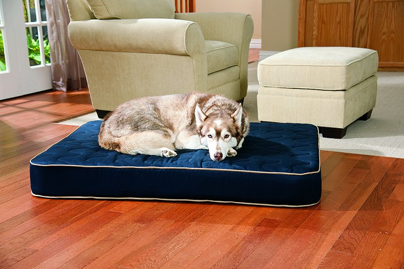 The Best Orthopedic Dog Beds Whole Dog Journal