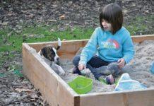 puppy in sandbox