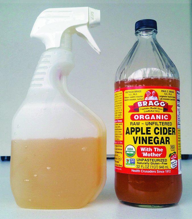 Természetes csodaszer kutyádnak - az oregánó olaj - Egészség, Giardia apple cider vinegar