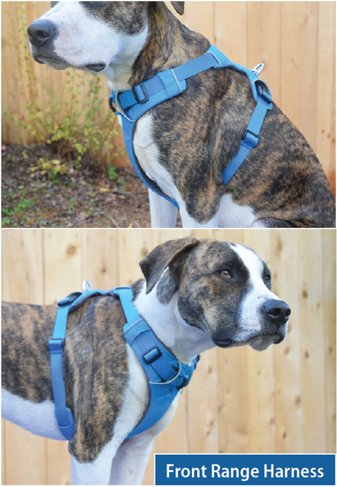 The Best Front-Clip Dog Harnesses - Whole Dog Journal