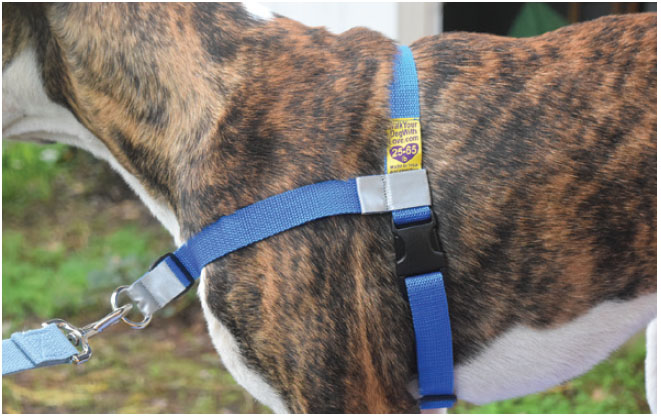 The Best Front Clip Dog Harnesses