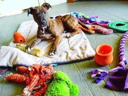 Puppy on blanket