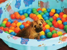 Puppy in kitty pool