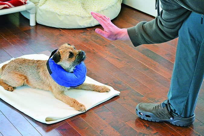 donut shaped recovery collar for dogs