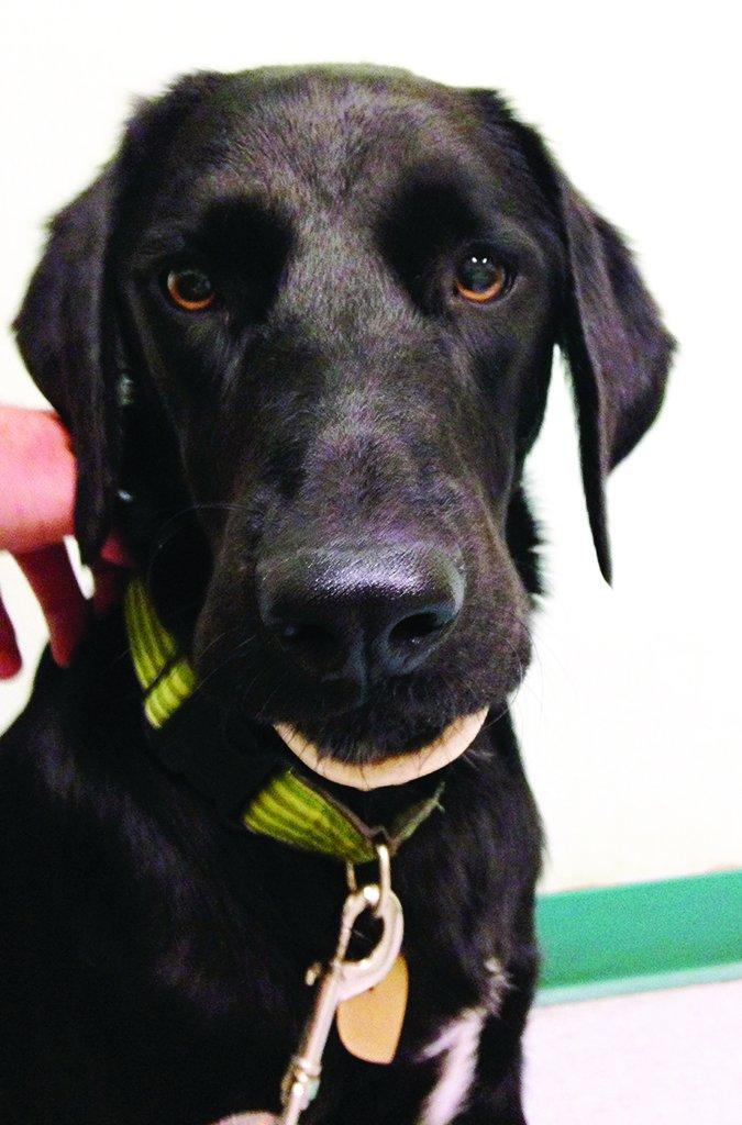 marrow bone stuck on dog's jaw