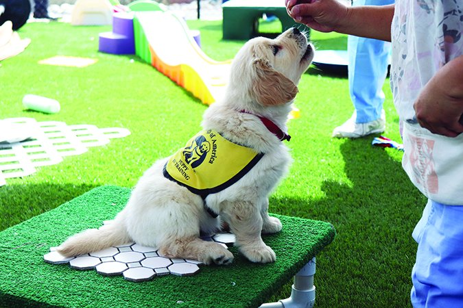 guide dogs of america puppy in training