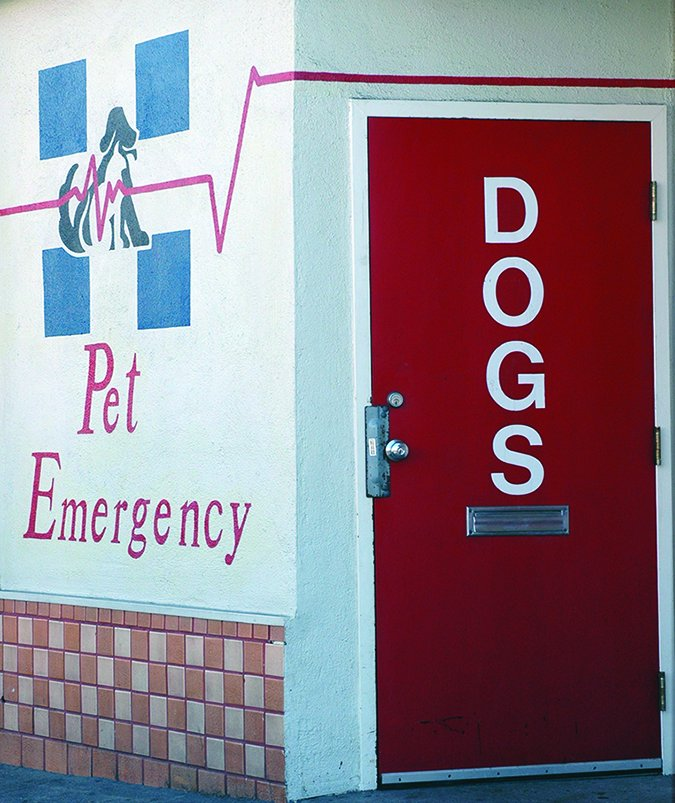 emergency animal hospital