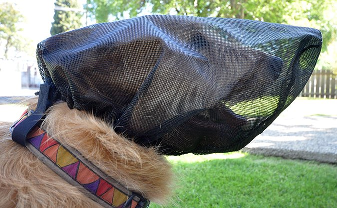 outfox foxtail protection mask for dogs