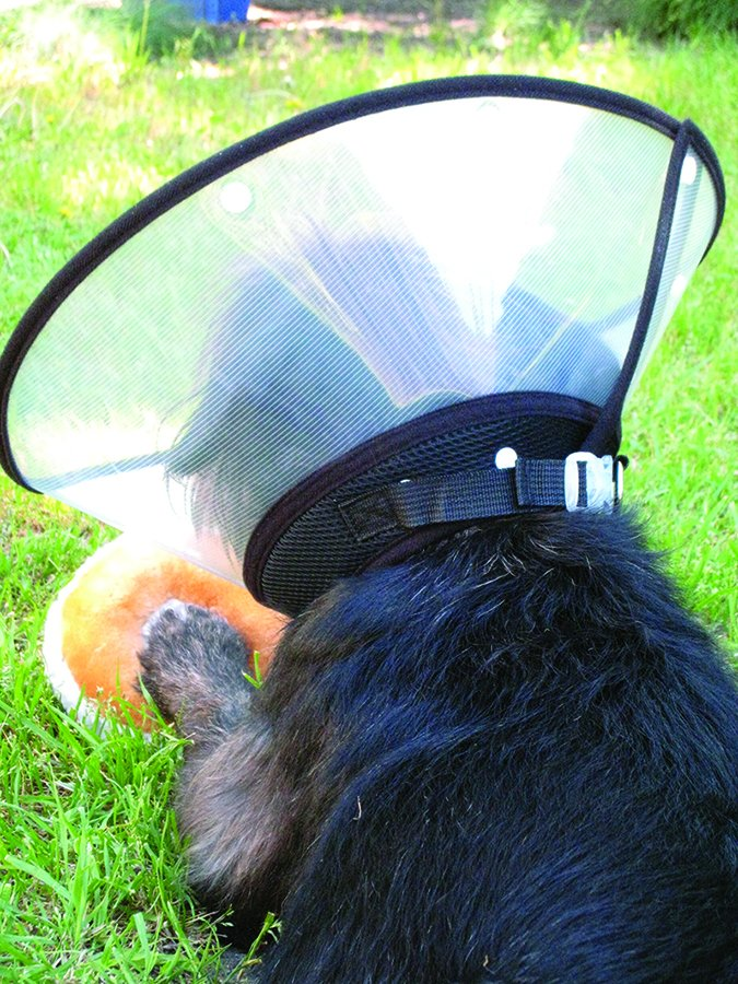 How to Treat Dog Wounds - Whole Dog Journal