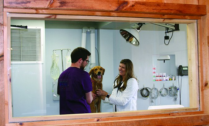 all about animals veterinary clinic
