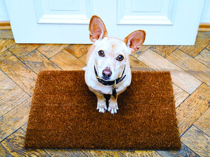 dog on a doormat