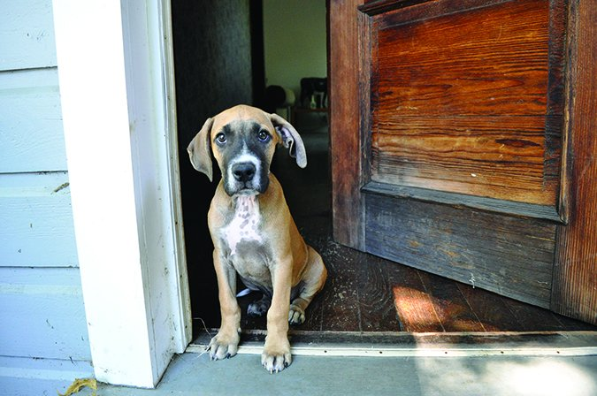puppy sitting in doorway