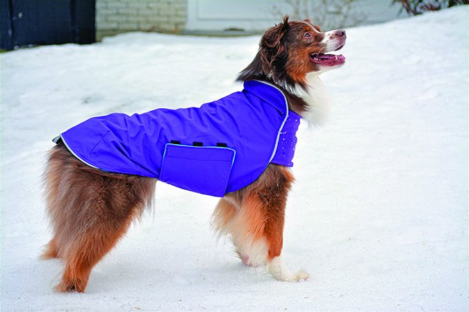 Chilly Dogs Trailblazer