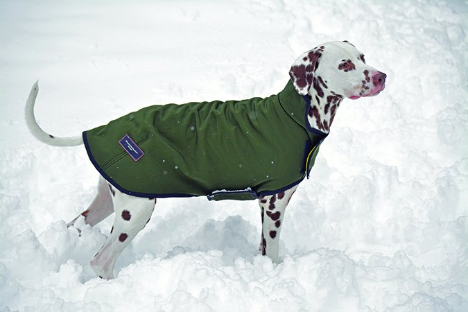 Mountain Mutt Powershield winter coat