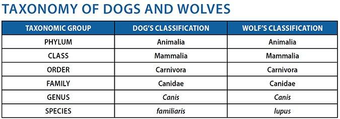 dog wolf taxonomy
