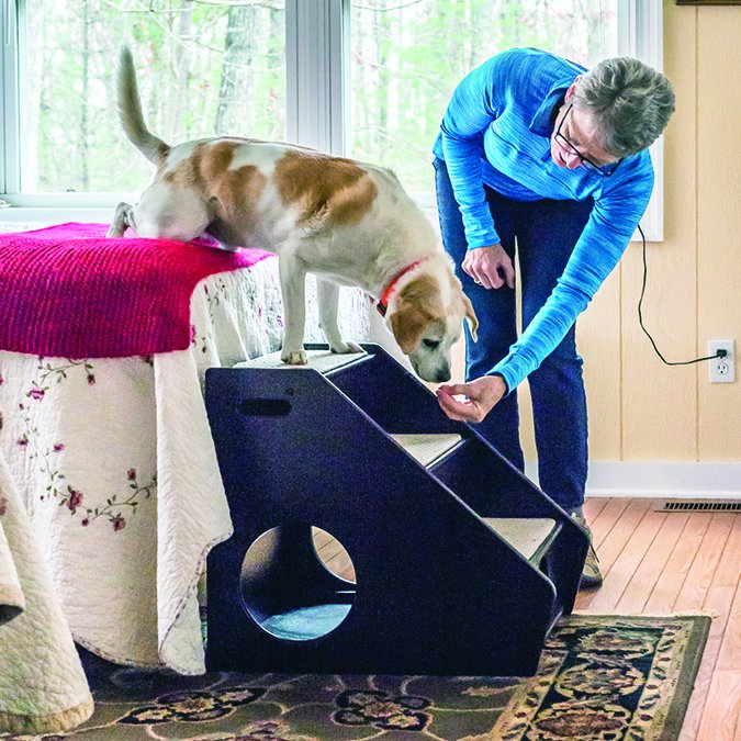 How To Keep Dogs Off Furniture If You Want To Whole Dog Journal