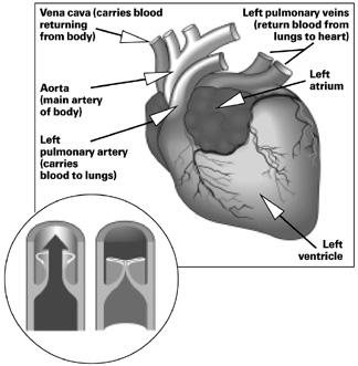 canine cardiovascular system