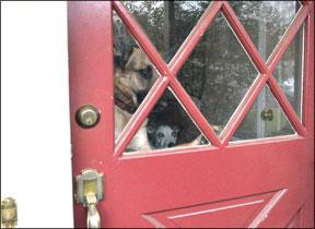 Unwanted Barking