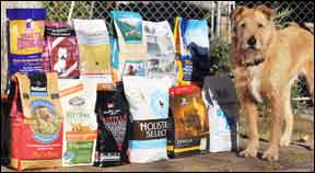 Selecting The Top Dry Dog Foods for Your Dog