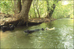 Canine Swimming