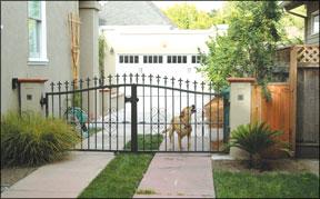 neighbors complaining about dog barking