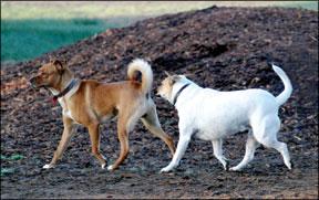 Canine Anal Sacs