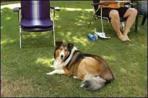 Lawn Pesticides Linked to Canine Malignant Lymphoma