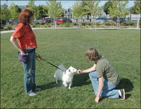 Dog Trainer