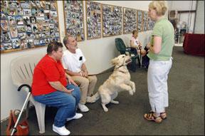 Dog Greeting Training