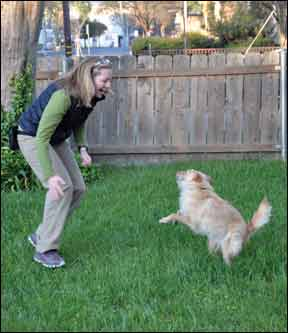 Teaching Your Dog Self Control