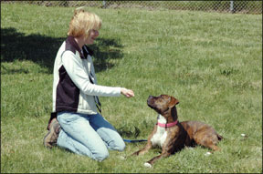 Fear-Free Dog Training Methods