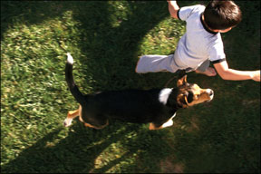 Dog Chasing Children