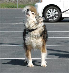 Dog-Reactive Behaviors