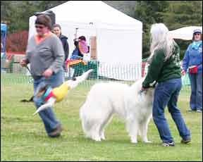 Dog Training Clubs
