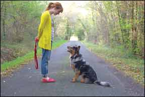 Dog Training Questions Answered by the Experts!