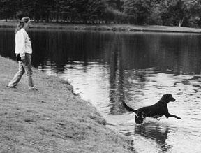 active dog with arthritis