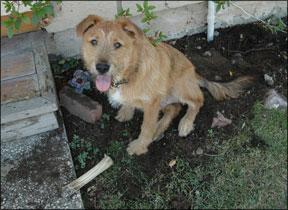 Canine Digging Behavior Problems