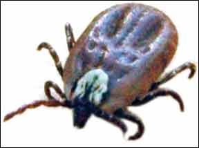 Lyme Disease Testing
