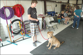 Training Classes for Adolescent Dogs
