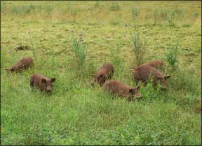 Peaceful Pastures Farm in Hickman