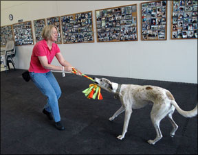 Playing Tug O' War With Your Dog