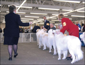 How to Train Show Dogs
