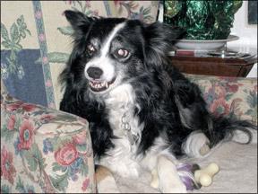 Canine Aggression