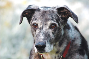 Senior Dogs and Hearing