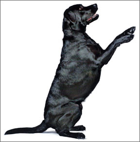 Best Dog Exercises