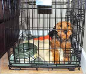 dog crate anxiety