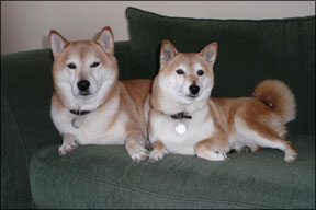 Canine Energy Medicine