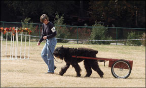 Dog Carting and Draft Training